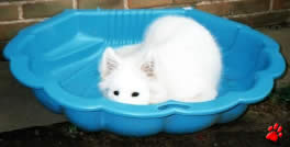 Meyer relaxing in his paddling pool